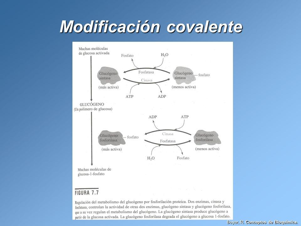 Modificación covalente Boyer, R. Conceptos de Bioquímica.