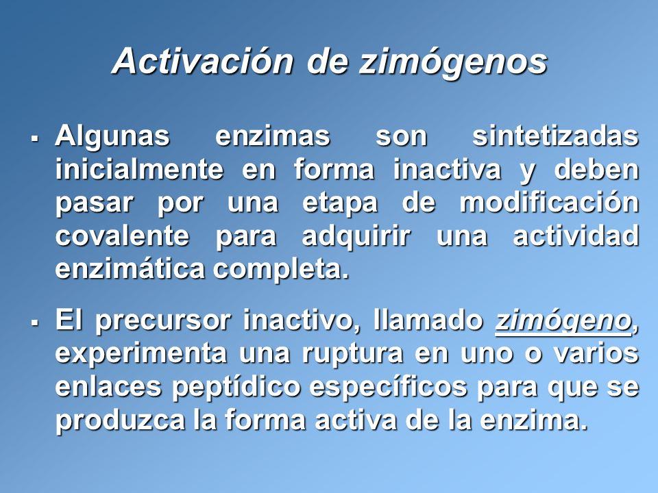 Activación de zimógenos Algunas enzimas son sintetizadas inicialmente en forma inactiva y deben pasar por una etapa de modificación covalente para adq