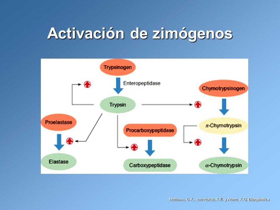 Activación de zimógenos Mathews, C.K., van Holde, K.E. y Ahern, K.G. Bioquímica