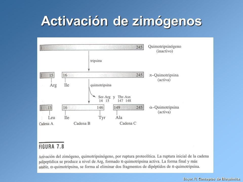 Boyer, R. Conceptos de Bioquímica. Activación de zimógenos