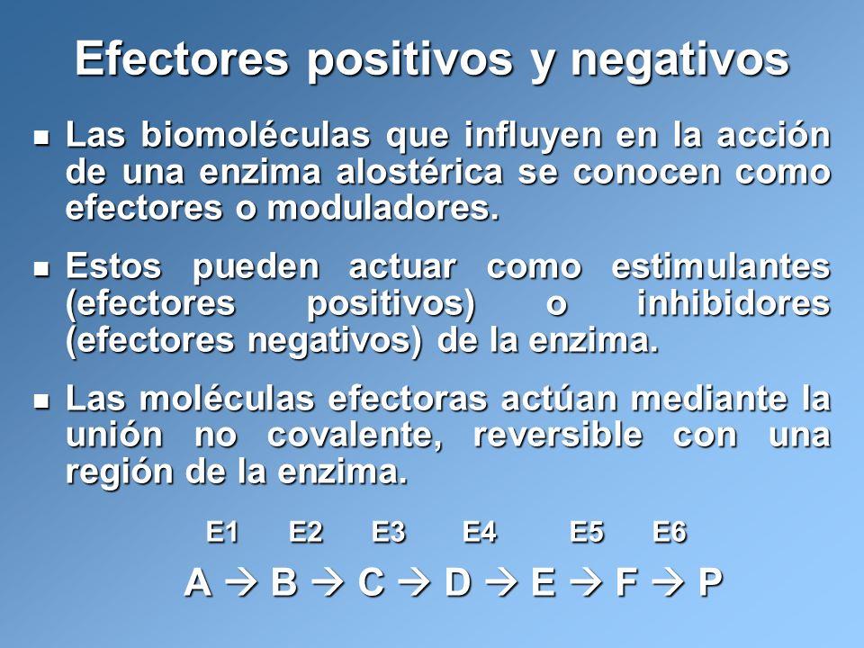 Las biomoléculas que influyen en la acción de una enzima alostérica se conocen como efectores o moduladores. Las biomoléculas que influyen en la acció