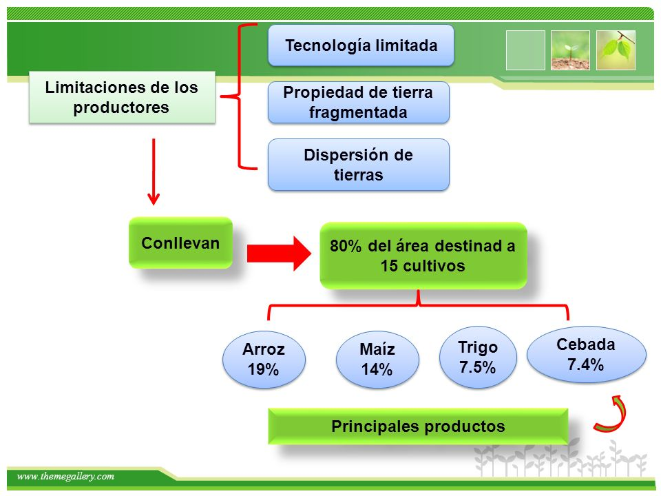 www.themegallery.com Limitaciones de los productores Tecnología limitada Propiedad de tierra fragmentada Dispersión de tierras Conllevan 80% del área destinad a 15 cultivos Arroz 19% Maíz 14% Trigo 7.5% Cebada 7.4% Principales productos