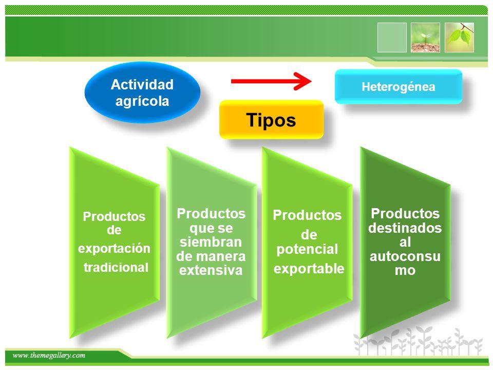 www.themegallery.com Actividad agrícola Heterogénea Productos de exportación tradicional Productos que se siembran de manera extensiva Productos de potencial exportable Productos destinados al autoconsu mo Tipos