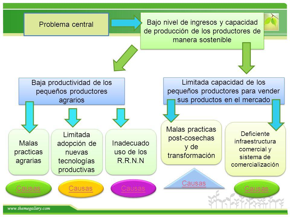 www.themegallery.com Problema central Bajo nivel de ingresos y capacidad de producción de los productores de manera sostenible Baja productividad de l
