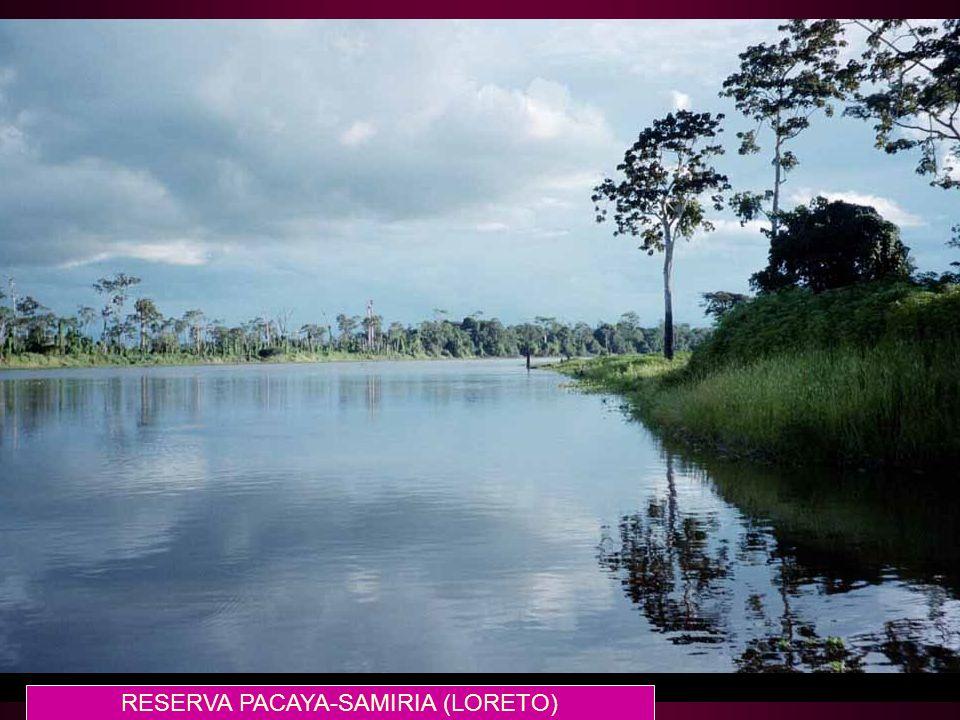 114 RESERVA PACAYA-SAMIRIA (LORETO)