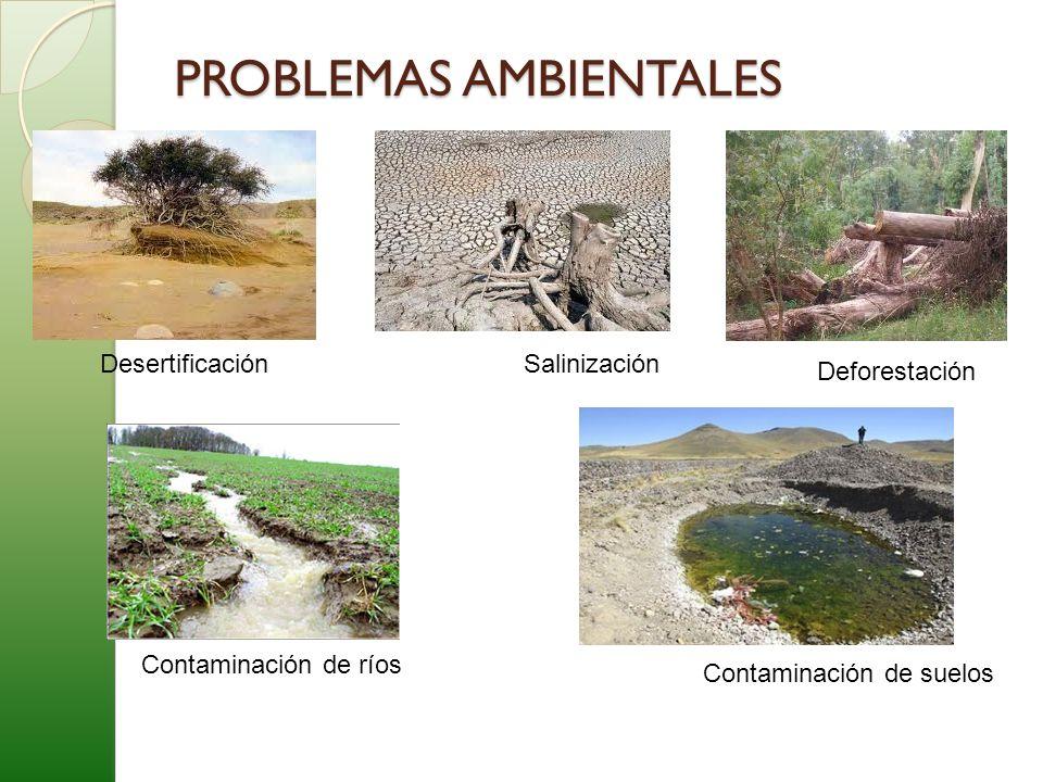 PROBLEMAS AMBIENTALES DesertificaciónSalinización Deforestación Contaminación de ríos Contaminación de suelos