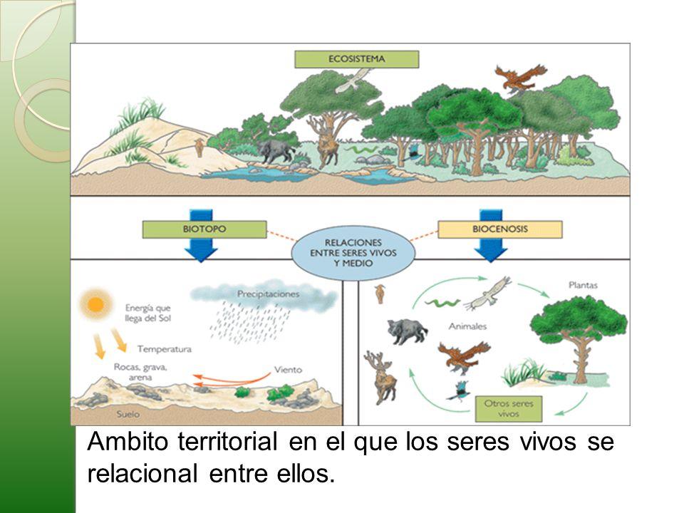 Aprovechamiento eficiente de los recursos naturales : obtener la mayor tasa explotación pero sin peligrar su conservación generando menor tasa de contaminación posible u otro efecto negativo.
