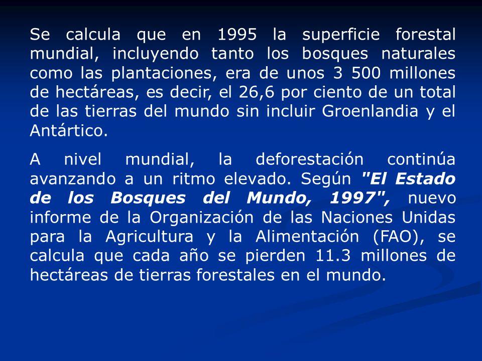 Se calcula que en 1995 la superficie forestal mundial, incluyendo tanto los bosques naturales como las plantaciones, era de unos 3 500 millones de hec