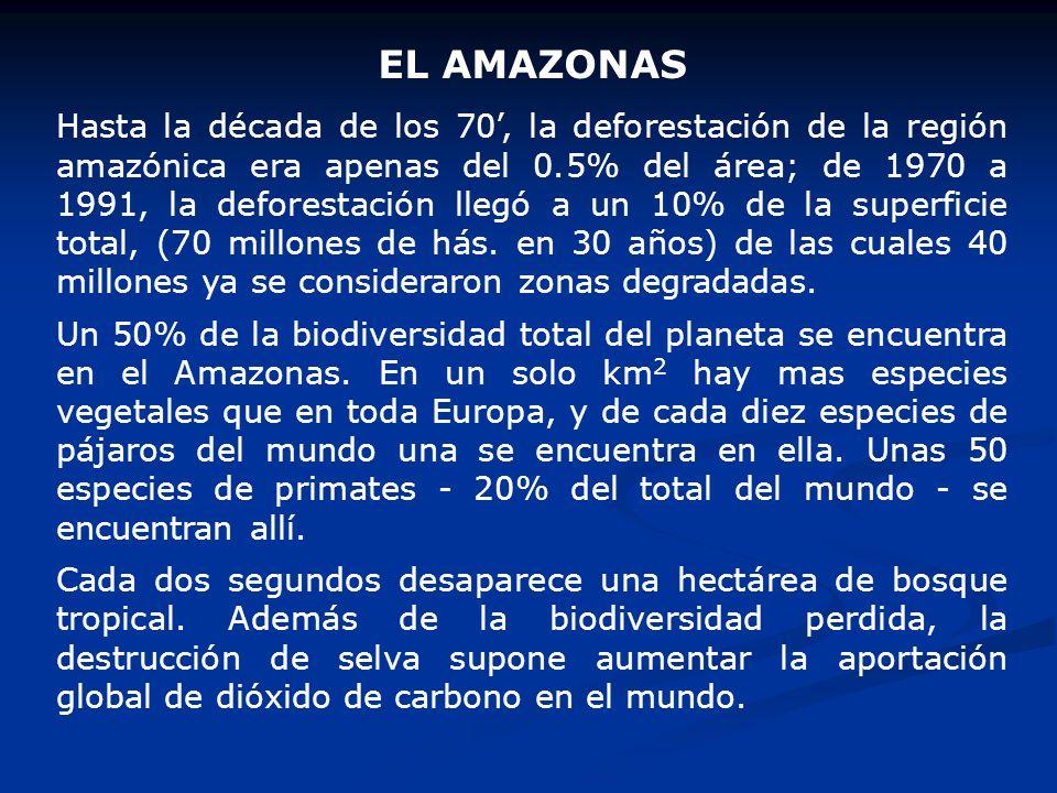 EL AMAZONAS Hasta la década de los 70, la deforestación de la región amazónica era apenas del 0.5% del área; de 1970 a 1991, la deforestación llegó a