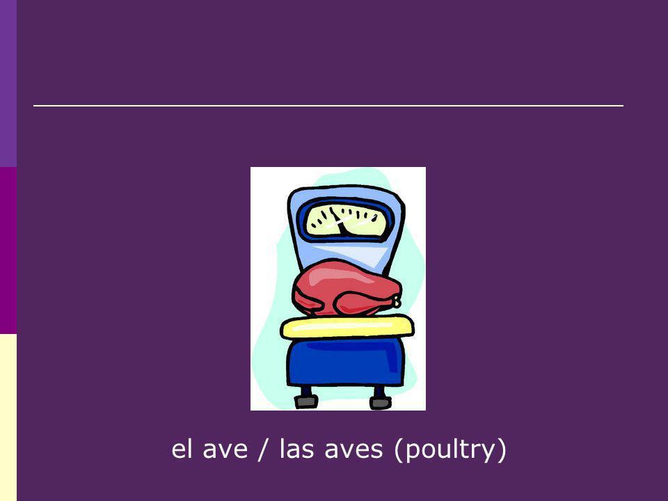 el ave / las aves (poultry)