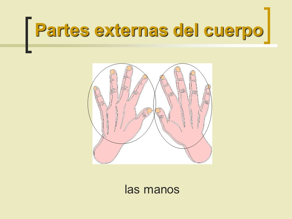 las manos Partes externas del cuerpo