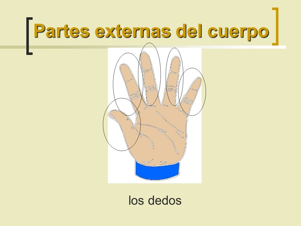 los dedos Partes externas del cuerpo
