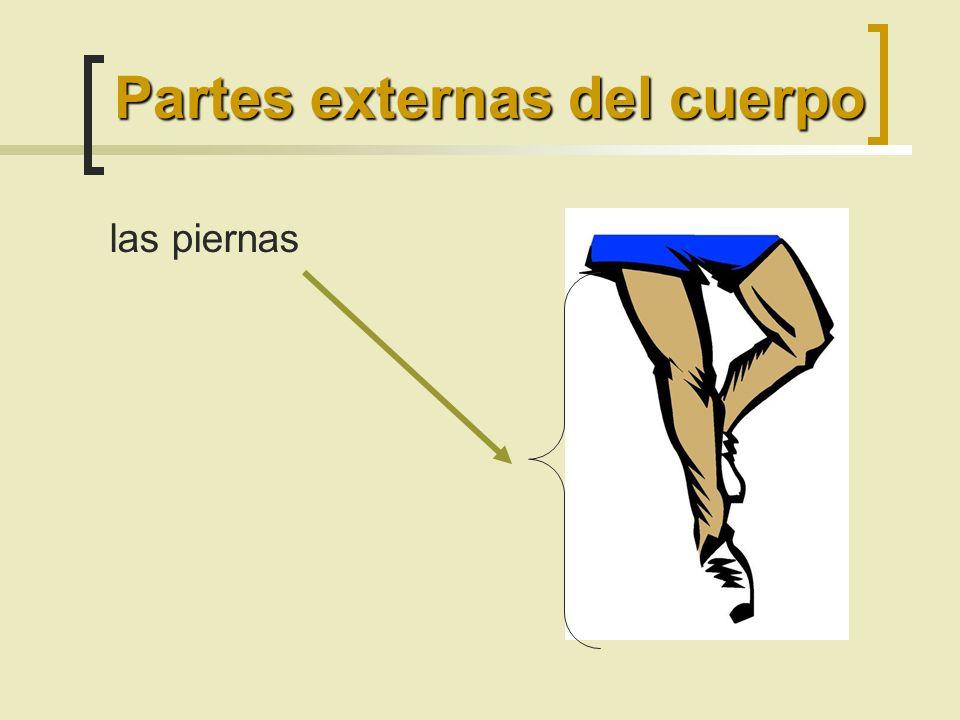 las piernas Partes externas del cuerpo