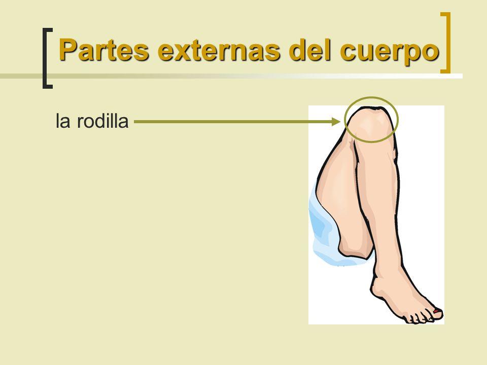la rodilla Partes externas del cuerpo