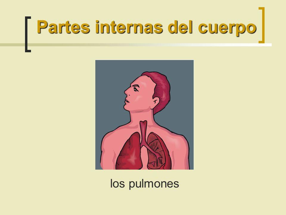 los pulmones Partes internas del cuerpo
