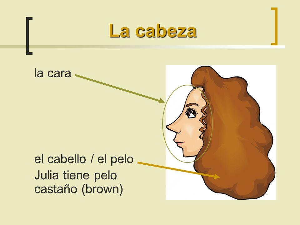 la cara el cabello / el pelo Julia tiene pelo castaño (brown) La cabeza