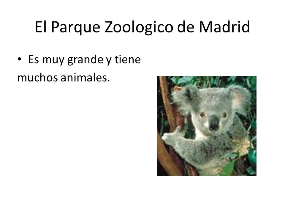 El Parque Zoologico de Madrid Es muy grande y tiene muchos animales.
