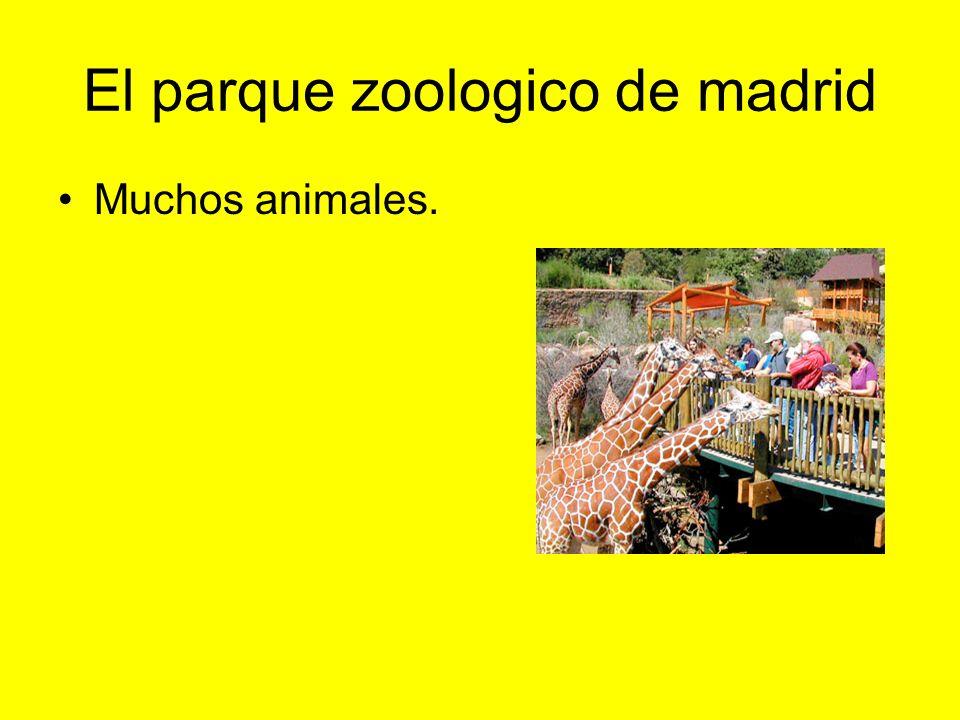 El parque zoologico de madrid Muchos animales.
