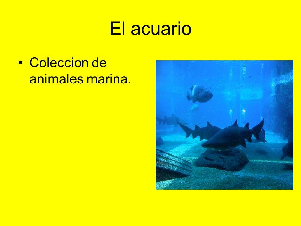 El acuario Coleccion de animales marina.