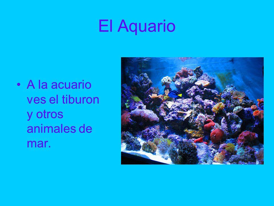 El Aquario A la acuario ves el tiburon y otros animales de mar.
