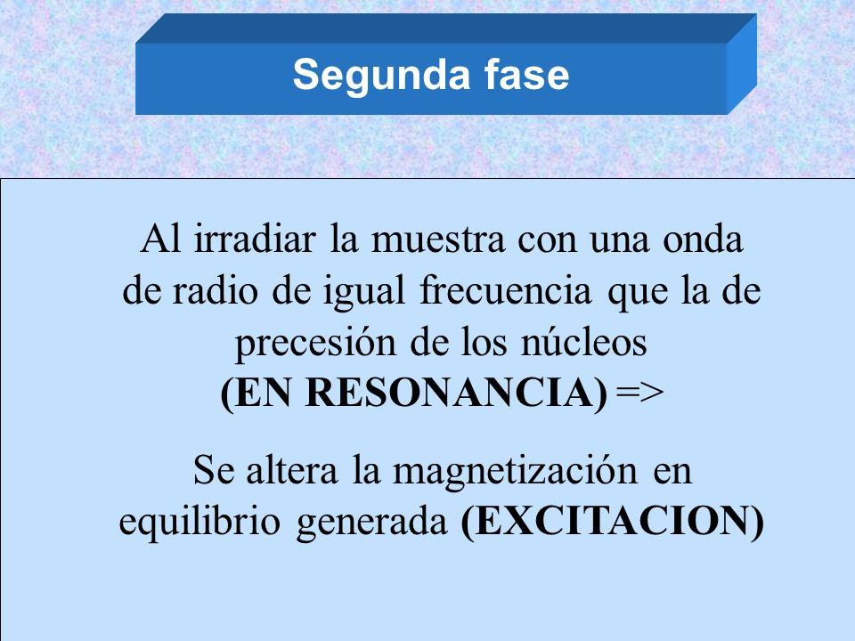 Segunda fase Al irradiar la muestra con una onda de radio de igual frecuencia que la de precesión de los núcleos (EN RESONANCIA) => Se altera la magne