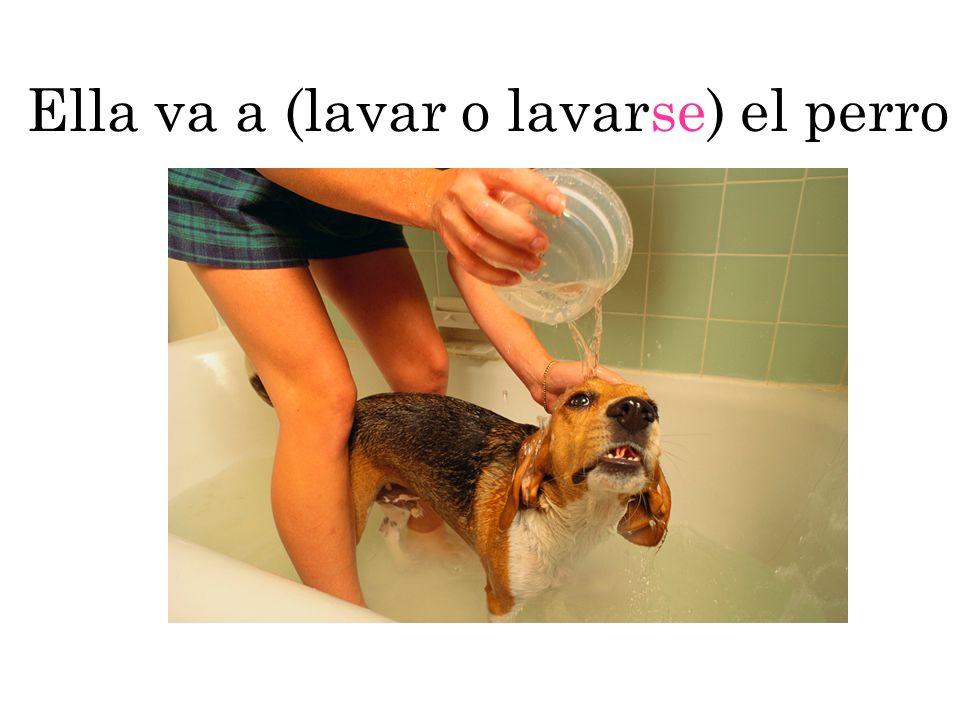 Ella va a lavar el perro