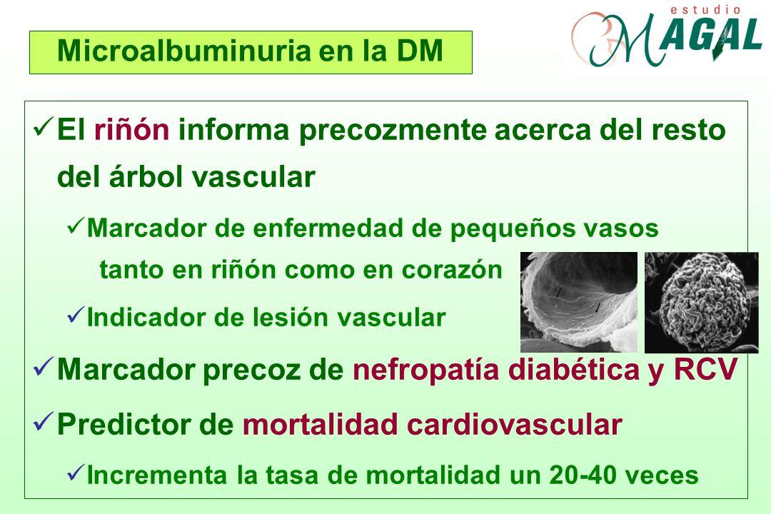 Grados de proteinuria en la DM 30 mg/24 h 300 mg/24 h 3,0 g/24 h NORMAL MICRO- ALBUMINURIA Nefropatía diabética INCIPIENTE PROTEINURIA Nefropatía diabética ESTABLECIDA RANGO NEFRÓTICO 30 mg/gr creat 300 mg/gr creat 2,3% 2,8% 2% VIV IIII - II CUANDO APARECE LA ALBUMINURIA YA EXISTE NEFROPATIA