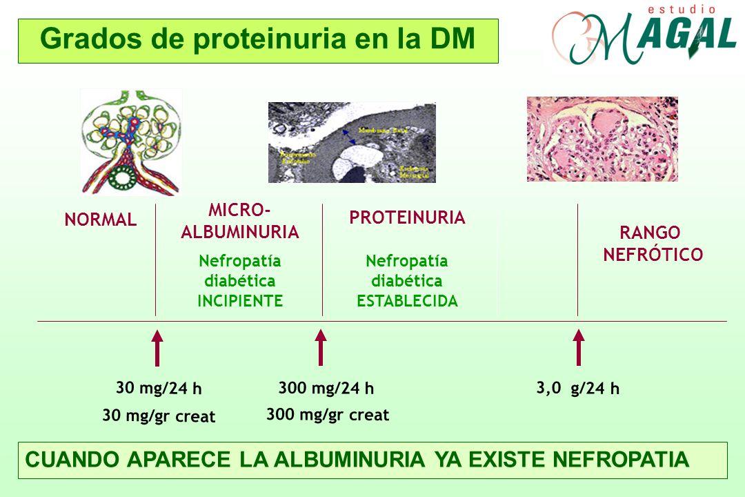 Grados de proteinuria en la DM 30 mg/24 h 300 mg/24 h 3,0 g/24 h NORMAL MICRO- ALBUMINURIA Nefropatía diabética INCIPIENTE PROTEINURIA Nefropatía diab