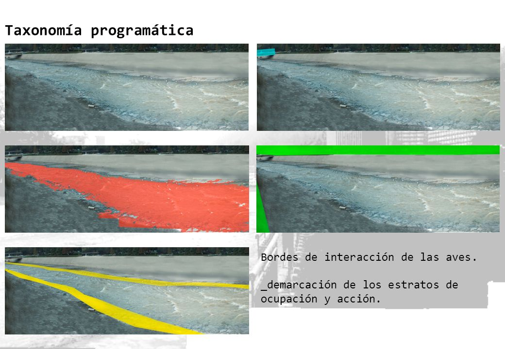 Taxonomía programática Bordes de interacción de las aves. _demarcación de los estratos de ocupación y acción.