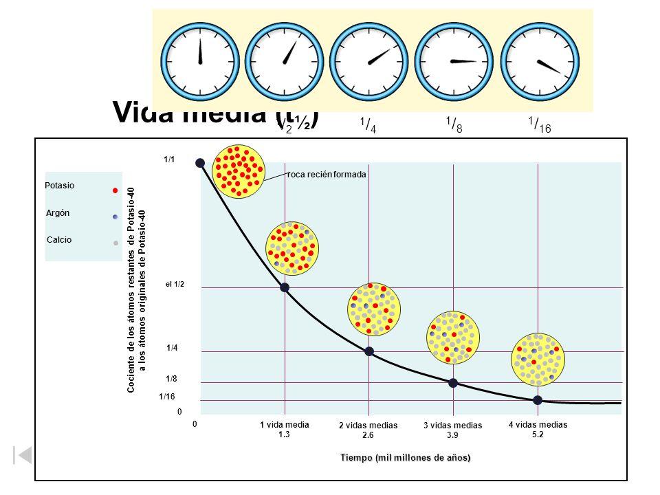 Vida media (t ½ ) –El tiempo necesario para que la mitad de los átomos de un núclido radiactivo decaigan. –Vida media más corta = menos estable. 1/21/
