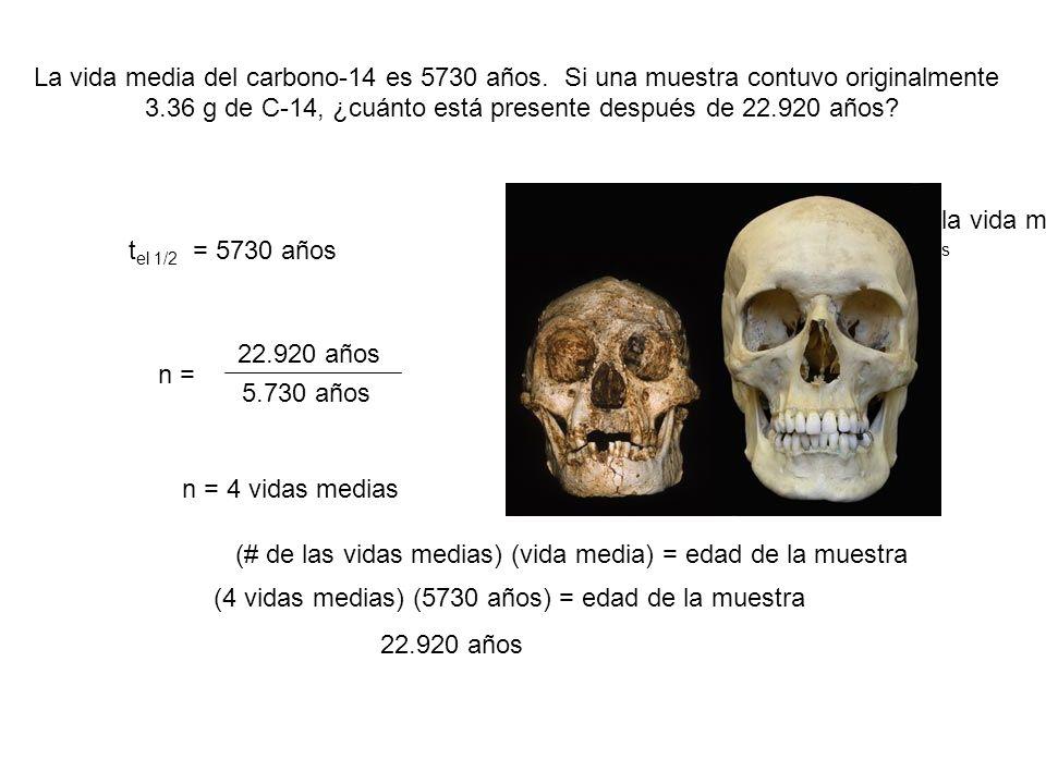 22.920 años La vida media del carbono-14 es 5730 años. Si una muestra contuvo originalmente 3.36 g de C-14, ¿cuánto está presente después de 22.920 añ
