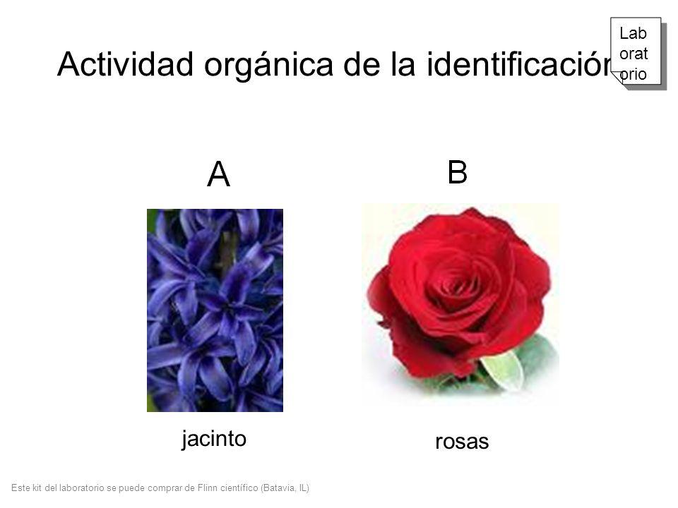 Actividad orgánica de la identificación jacinto rosas Lab orat orio Este kit del laboratorio se puede comprar de Flinn científico (Batavia, IL)