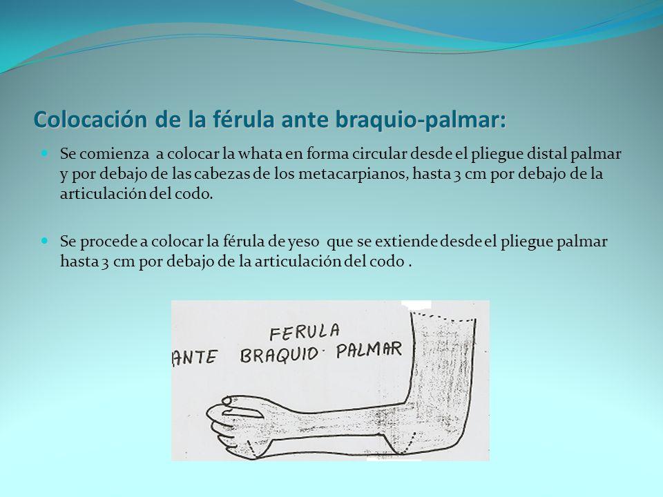 Colocación de la férula ante braquio-palmar: Se comienza a colocar la whata en forma circular desde el pliegue distal palmar y por debajo de las cabez