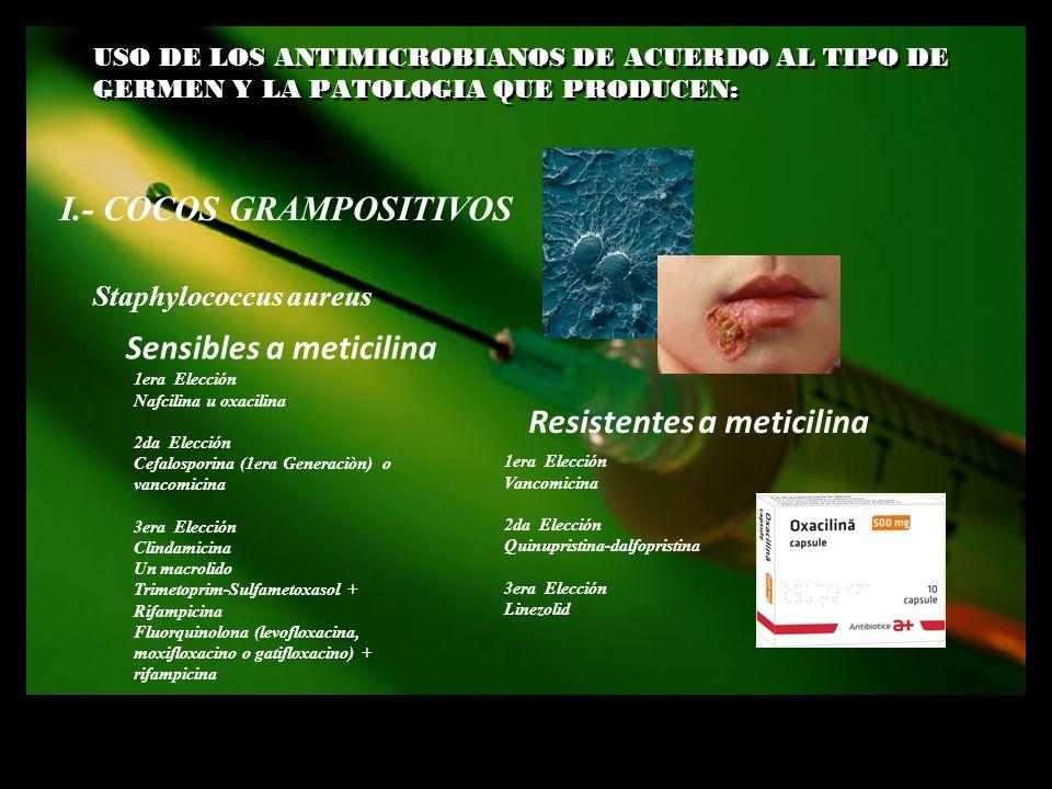 USO DE LOS ANTIMICROBIANOS DE ACUERDO AL TIPO DE GERMEN Y LA PATOLOGIA QUE PRODUCEN: I.- COCOS GRAMPOSITIVOS Sensibles a meticilina Staphylococcus aur