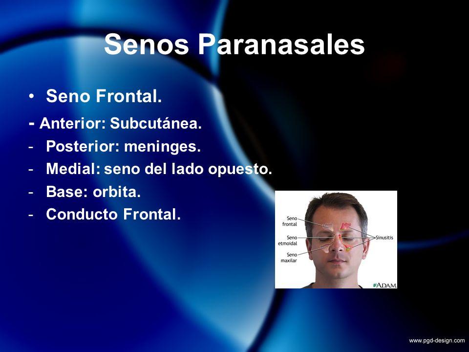 Senos Paranasales Seno Frontal. - Anterior: Subcutánea. -Posterior: meninges. -Medial: seno del lado opuesto. -Base: orbita. -Conducto Frontal.