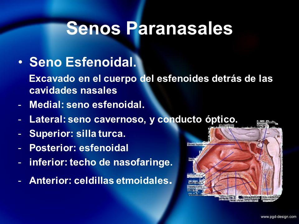 Senos Paranasales Seno Esfenoidal. Excavado en el cuerpo del esfenoides detrás de las cavidades nasales -Medial: seno esfenoidal. -Lateral: seno caver