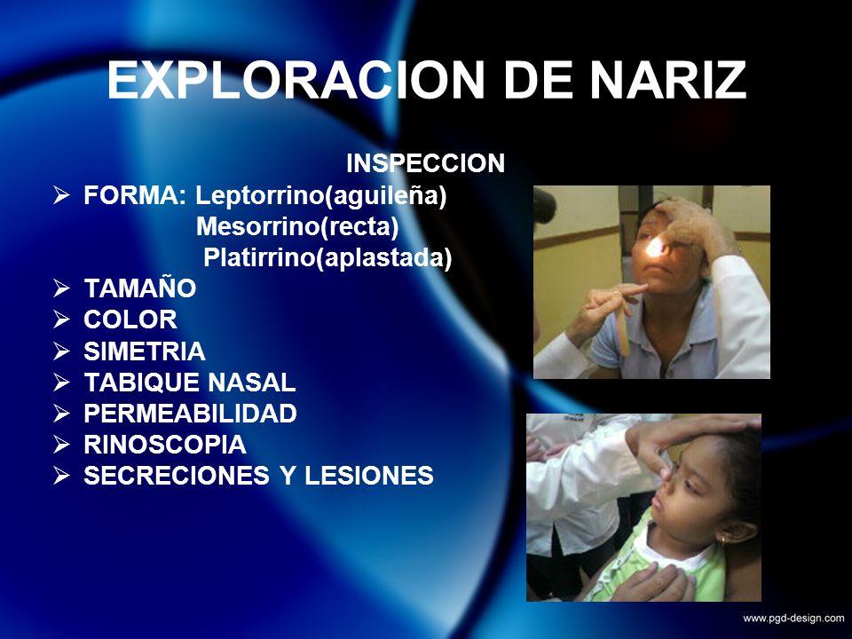 EXPLORACION DE NARIZ INSPECCION FORMA: Leptorrino(aguileña) Mesorrino(recta) Platirrino(aplastada) TAMAÑO COLOR SIMETRIA TABIQUE NASAL PERMEABILIDAD R