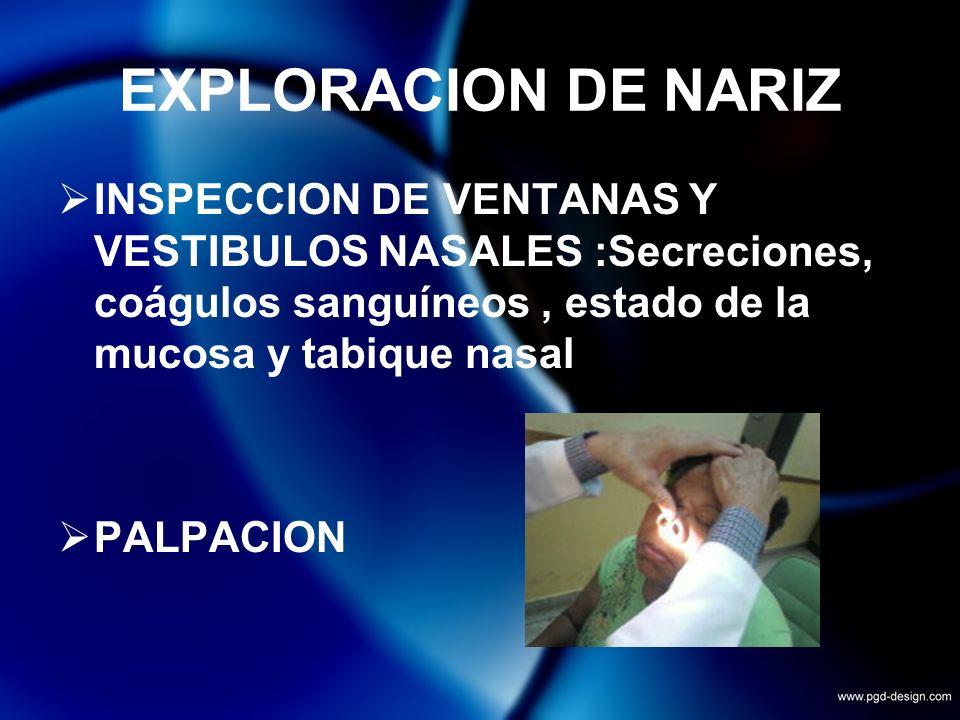 EXPLORACION DE NARIZ INSPECCION DE VENTANAS Y VESTIBULOS NASALES :Secreciones, coágulos sanguíneos, estado de la mucosa y tabique nasal PALPACION