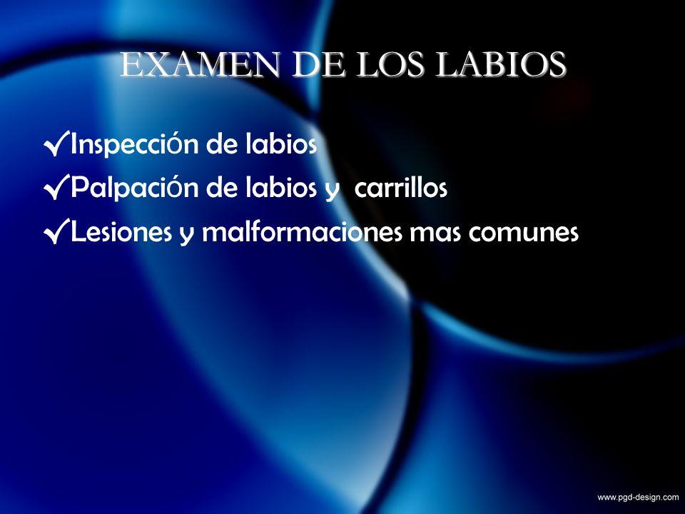 EXAMEN DE LOS LABIOS Inspecci ó n de labios Palpaci ó n de labios y carrillos Lesiones y malformaciones mas comunes