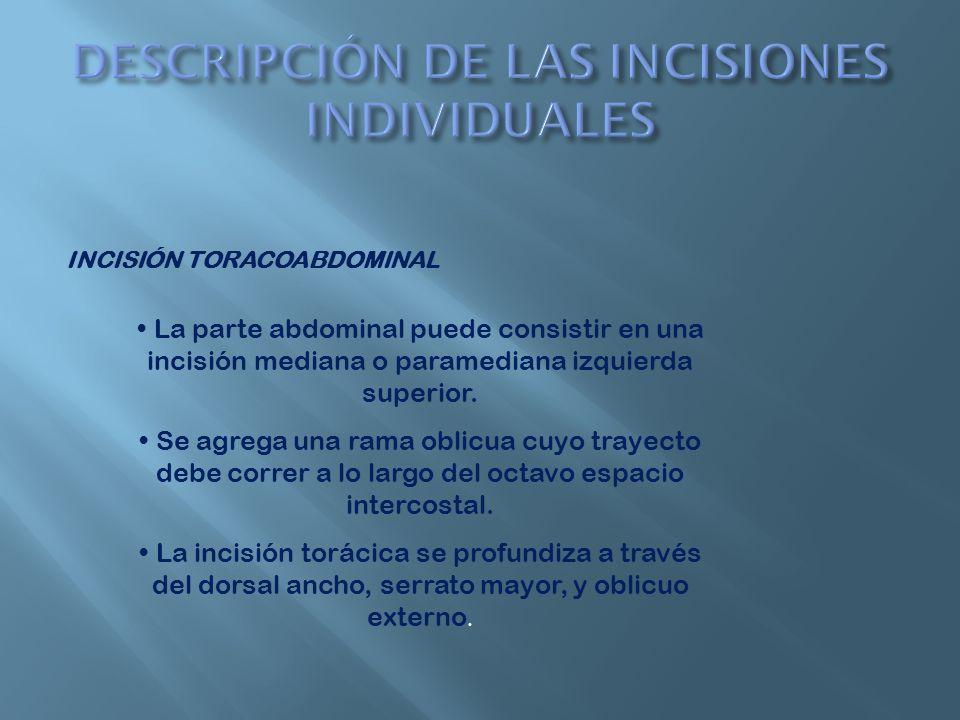 INCISIÓN TORACOABDOMINAL Se seccionan los músculos intercostales para abrir la cavidad pleural.