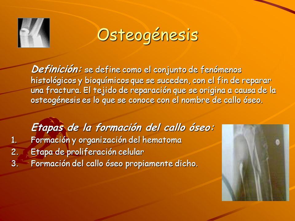 Osteogénesis 1.Formación y organización del hematoma: Al producirse el trauma se genera un hematoma en el sitio de la fractura, formándose este por la rotura de vasos sanguíneos que se encuentran en el periostio, tejidos blandos y vasos que nutren el hueso.