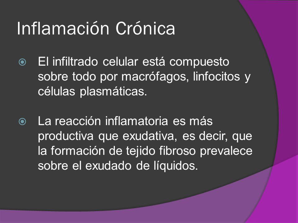 Inflamación Crónica El infiltrado celular está compuesto sobre todo por macrófagos, linfocitos y células plasmáticas. La reacción inflamatoria es más