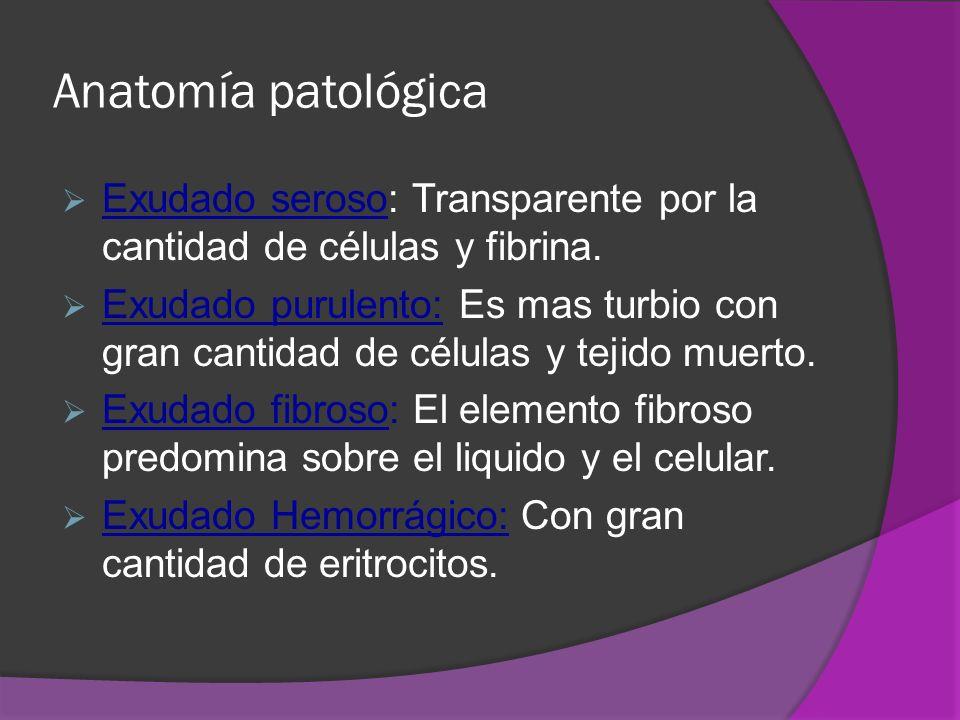 Anatomía patológica Exudado seroso: Transparente por la cantidad de células y fibrina. Exudado purulento: Es mas turbio con gran cantidad de células y
