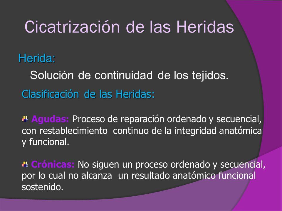 Cicatrización de las Heridas Herida: Solución de continuidad de los tejidos. Clasificación de las Heridas: Agudas: Proceso de reparación ordenado y se