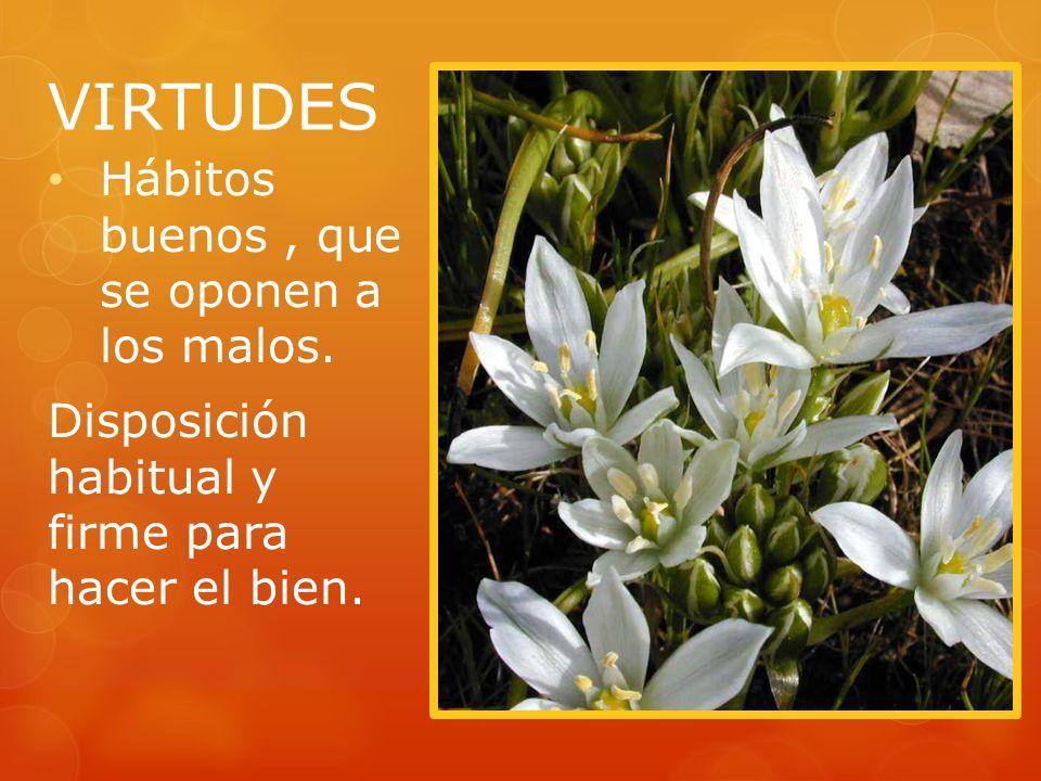 VIRTUDES Hábitos buenos, que se oponen a los malos. Disposición habitual y firme para hacer el bien.