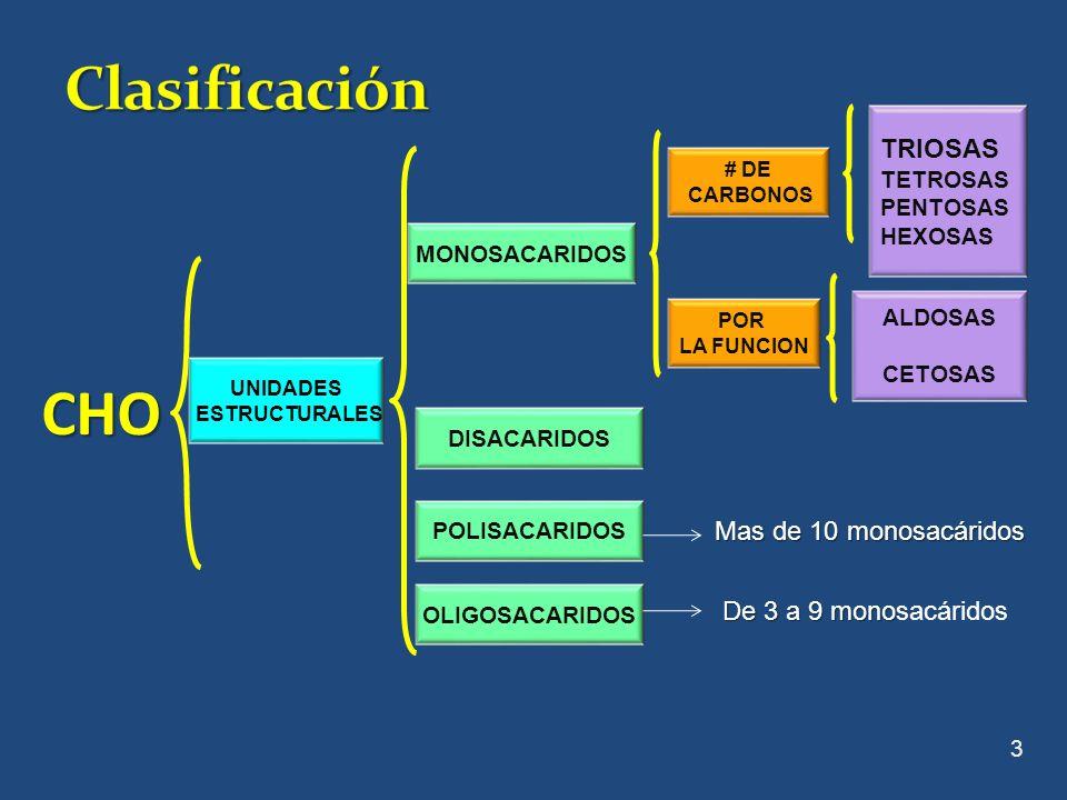 También llamados azucares simples, que tienen una cadena no ramificada de 3 a 6 carbonos y no pueden fragmentarse en moléculas mas pequeñas por hidrólisis También llamados azucares simples, que tienen una cadena no ramificada de 3 a 6 carbonos y no pueden fragmentarse en moléculas mas pequeñas por hidrólisis.Clasificación Número de Carbonos: 3 átomos de CTRIOSA 4 átomos de CTETROSA 5 átomos de CPENTOSA 6 átomos de CHEXOSA 4