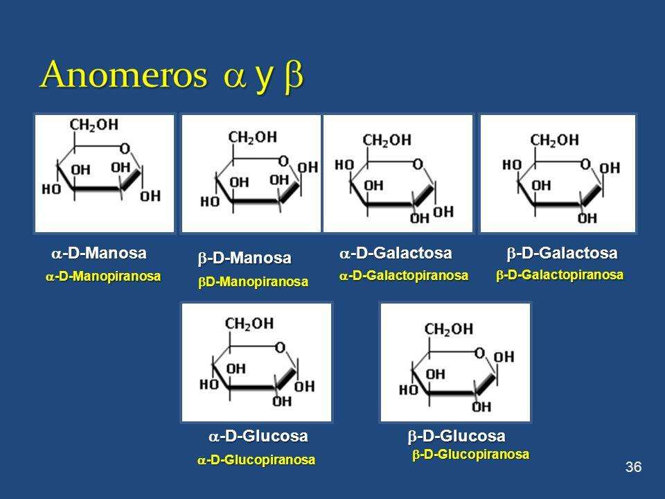 36 -D-Galactosa -D-Galactosa -D-Manosa -D-Manosa -D-Glucosa -D-Glucosa D-Manopiranosa D-Manopiranosa -D-Manopiranosa -D-Manopiranosa -D-Galactopiranos