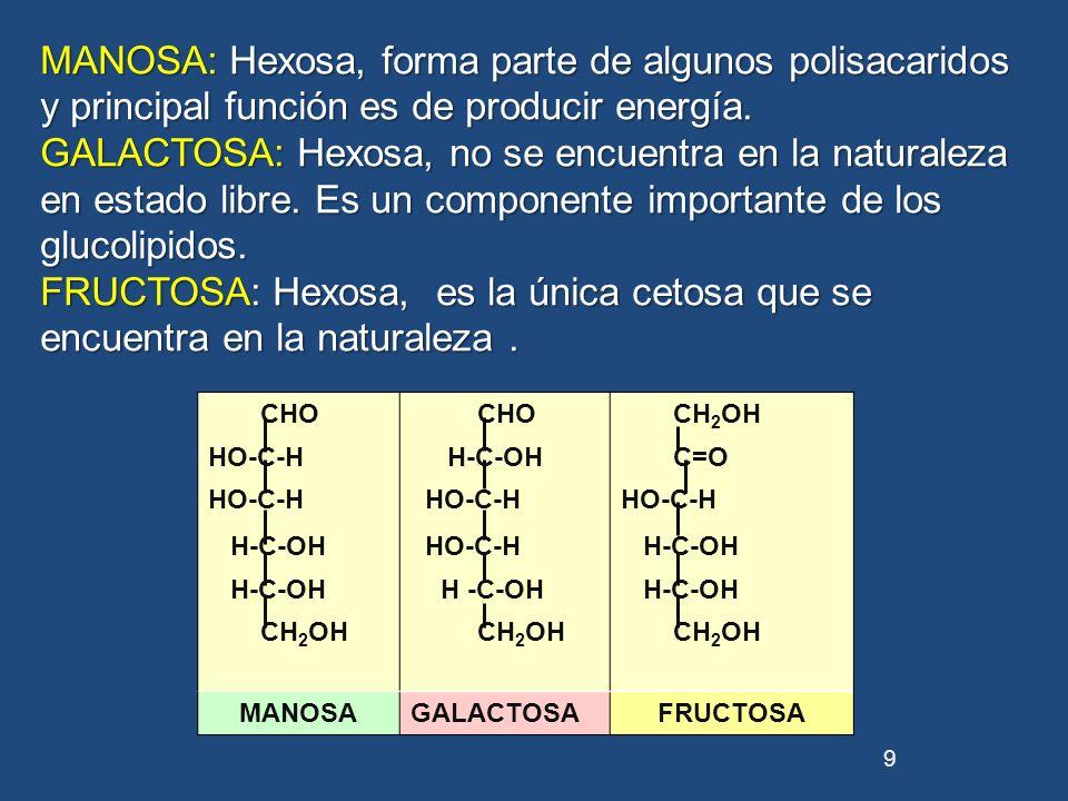 CHO CH 2 OH HO-C-H H-C-OH C=O HO-C-H H-C-OH HO-C-H H-C-OH CH 2 OH MANOSAGALACTOSAFRUCTOSA 9 MANOSA: Hexosa, forma parte de algunos polisacaridos y pri
