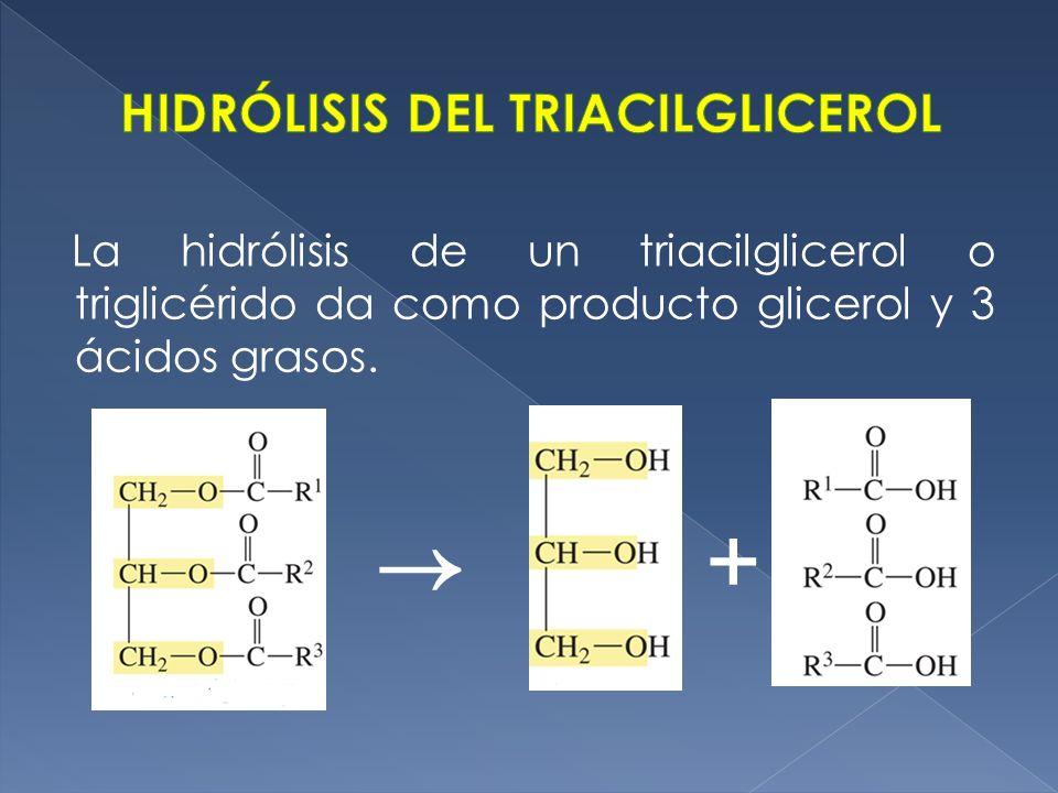 La hidrólisis de un triacilglicerol o triglicérido da como producto glicerol y 3 ácidos grasos. +