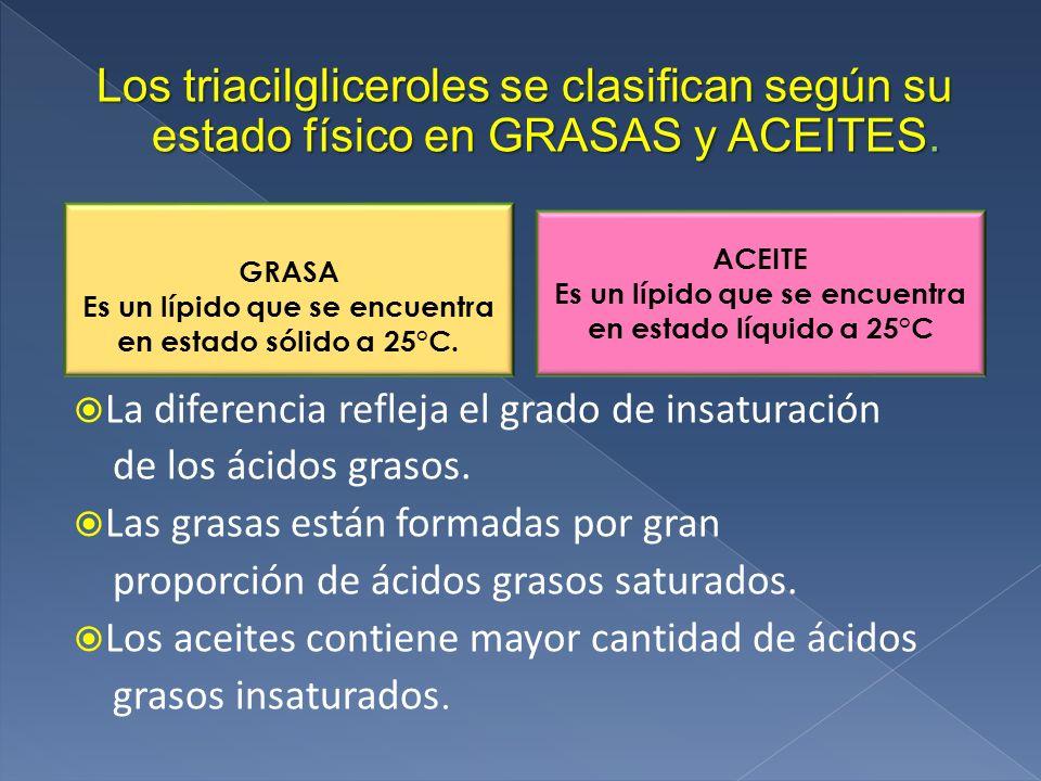 Los triacilgliceroles se clasifican según su estado físico en GRASAS y ACEITES. La diferencia refleja el grado de insaturación de los ácidos grasos. L
